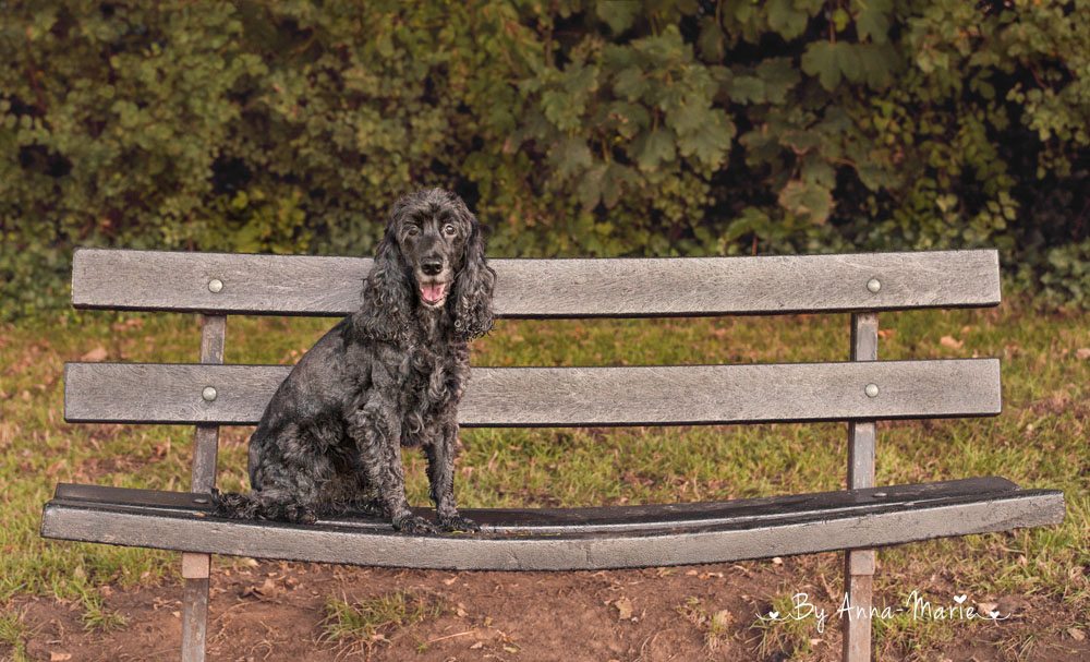 Pet Photography Downend