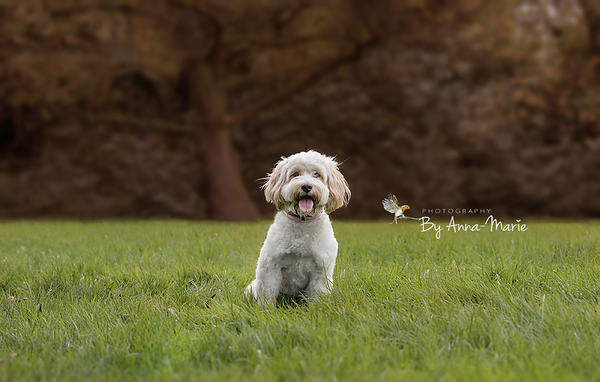 Yate Pet Photographer