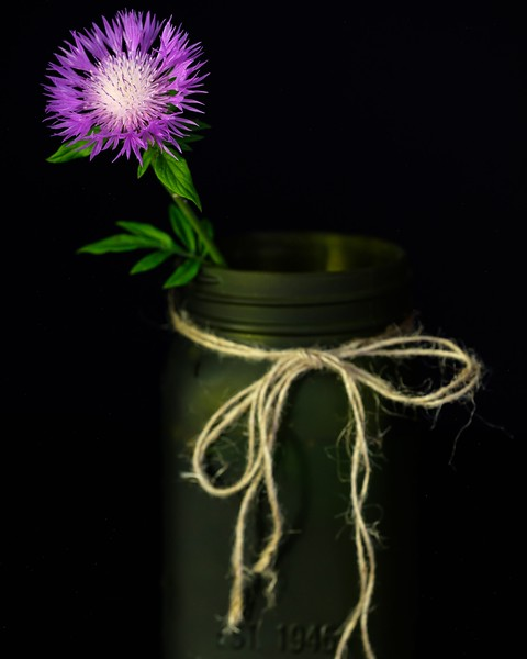 Flower in the mason jar