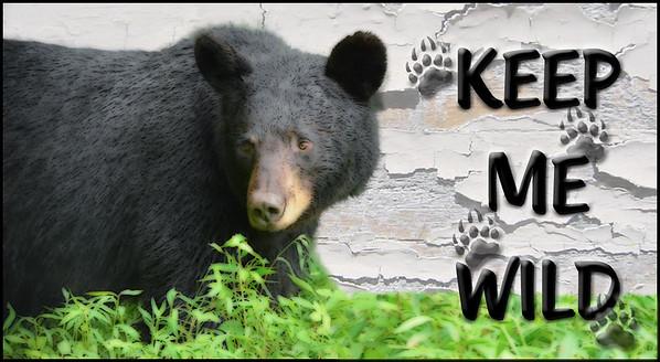 Keep Me Wild