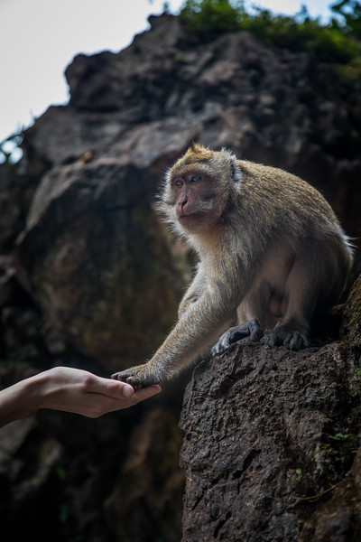 """feeding a wild macaque at the """"Monkey Temple"""""""