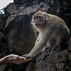 "feeding a wild macaque at the ""Monkey Temple"""