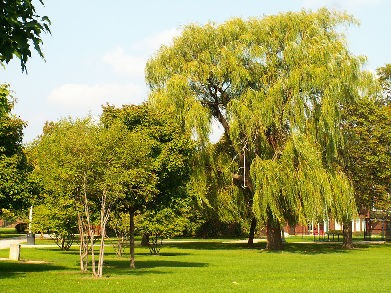 More Willows