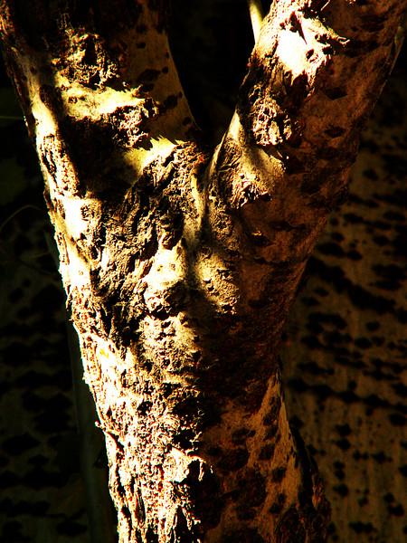 Shadows on a Tree
