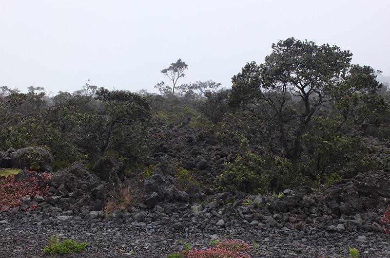Hawaii Big Island-2027