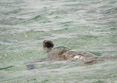 Punahele Swimming