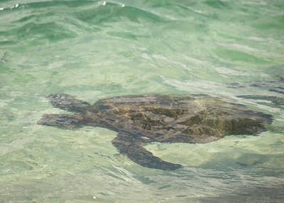 Punahele Underwater