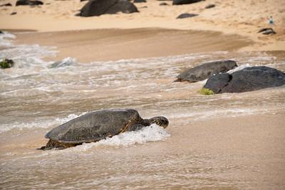 Punahele Battling Waves & Beaching