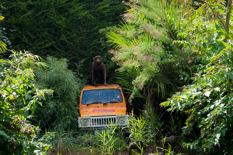 Jeep and baboon.