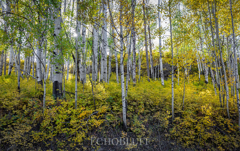 Afternoon in the Aspen