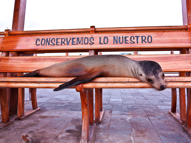 Sea Lion - San Cristobal, Galapagos.