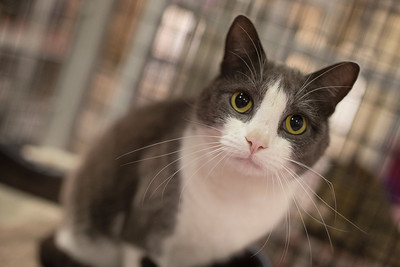 Inside... On the inside (like prison). This is Laura a sweet kitty at SAFE Haven for Cats that need to be adopted.