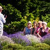 A wedding ceremony during lavender season at Bilston Creek Farm in Metchosin, just outside of Victoria BC.