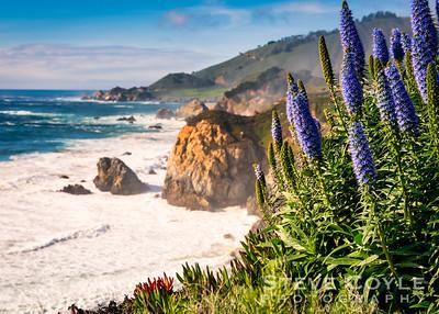 Coastal Blooms