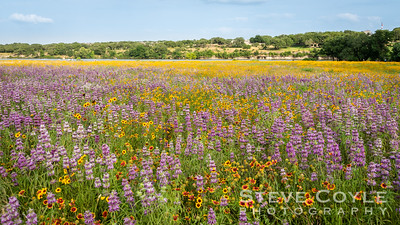 Wildflowers Galore