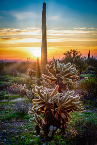 Desert Sol