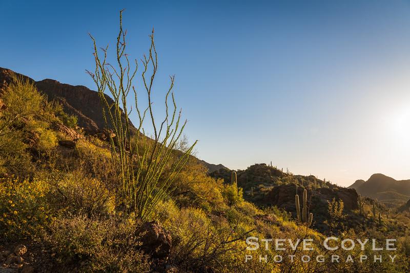 Tucson Rising