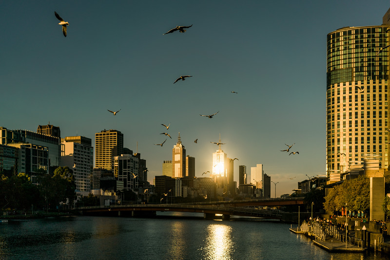 Seagulls Over the Yarra River in Melbourne