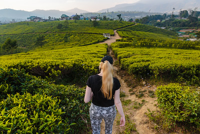 Exploring Nuwara Eliya's Tea Fields