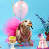 Dog cake smash, all props available