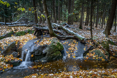 Forest floor after the first snow in fall