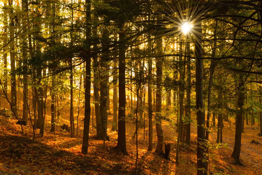 Sunrise through the forest