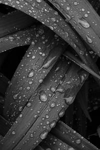 Raindrop abstract