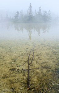 Fog on Niapiskau Island