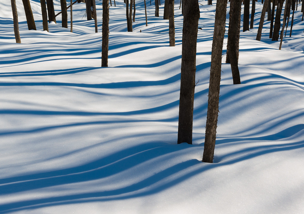 Shadows of tree trunks on a bright winter day