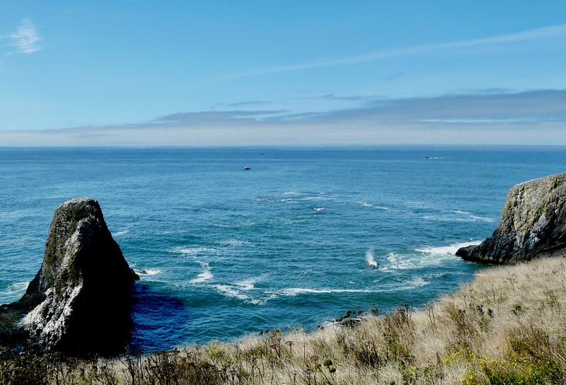 Which apparently is a GREAT place to see gray whales!