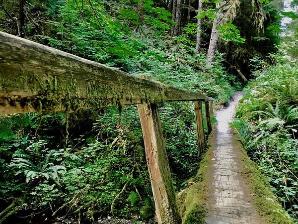 I was pretty proud of myself for taking that narrow log bridge on the way back. My vertigo didn't kick in at all!