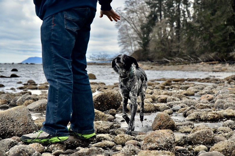 Winston seemed not to notice any chill and happily explored the water and rocks.
