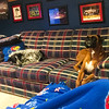 "Winston doesn't always put on the most patient behavior with other dogs, so we were glad he was going to have to practice being around other dogs during our visit. Jenni's family's boxer Rawlings is 3, so he has calmed down some but was persistent in trying to get Winston to play. Winston did not have the same goals and avoided Rawlings as much as possible. When we left him with Jenni Saturday night to visit our friends Sam and Greg, Jenni sent us a picture with the dogs on opposite ends of a sofa: ""Progress!!!"""
