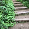 Tiny dog, big steps.
