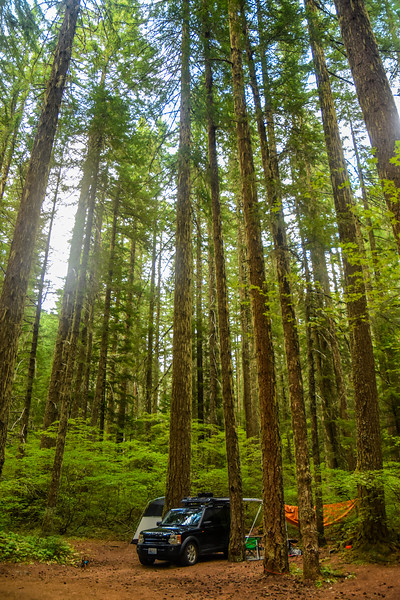 I finally had my beach fix, and we headed inland to Willamette National Forest.