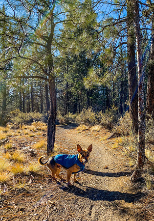 On Tuesday, I waited for the temperatures to reach the 20s before layering up Tully and myself. We were rewarded with a beautiful view on easy trails just outside our cabin door.