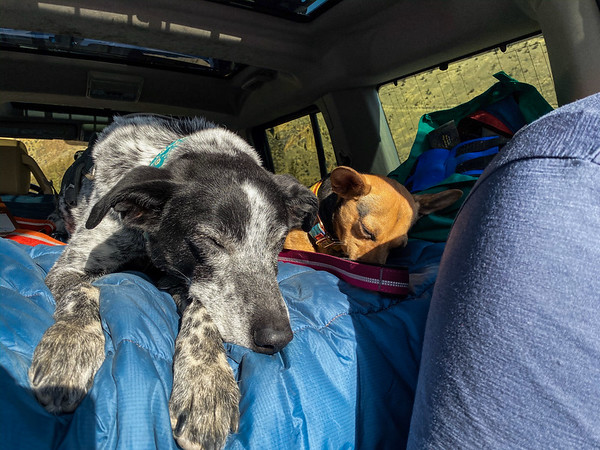 The dogs napped easily after their time at Smith Rock.