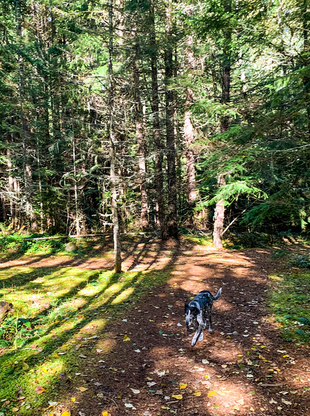 Mikey took Winston for a 3-mile walk along the river. The old dog did great, keeping his balance and even running down the hills.