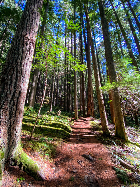Please pardon the photo dump. These trails were beautiful the whole route. The woods mesmerized me, the views of Tahoma/Ti'Swaq (Mount Rainer) over the cliffs were spectacular, and I loved every minute of it.