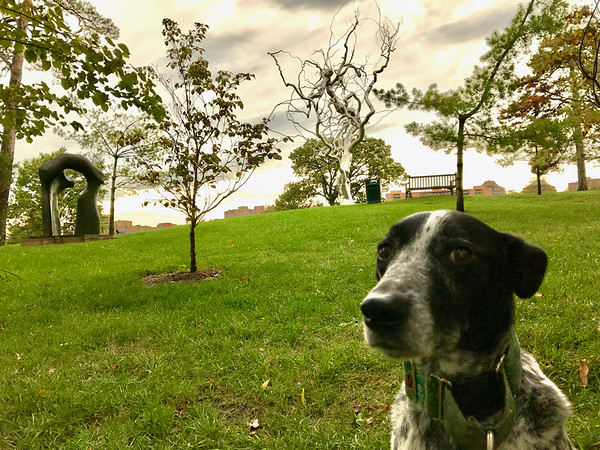 Winnel and I routinely run by Ferment in the Nelson-Atkins Sculpture Park.