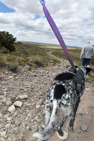 Petroglyph allows pets on trails in three of its four day use areas.