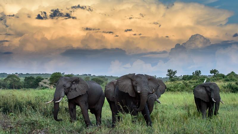 Stormy Elephants
