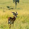 Murchison Falls NP, Uganda