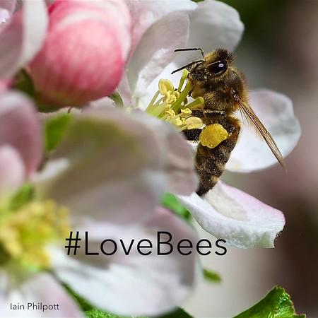 Bee_Insta_v2