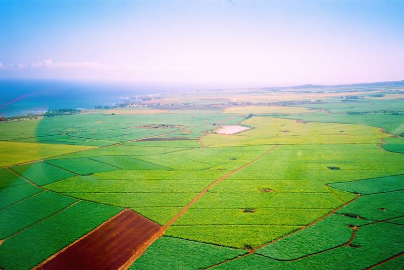 Green Fields - Maui, Hawaii