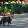 Apr. 19, 2016: It was a beautiful morning for a Botanica visit! It surprises me how many cats I've been seeing on my visits!