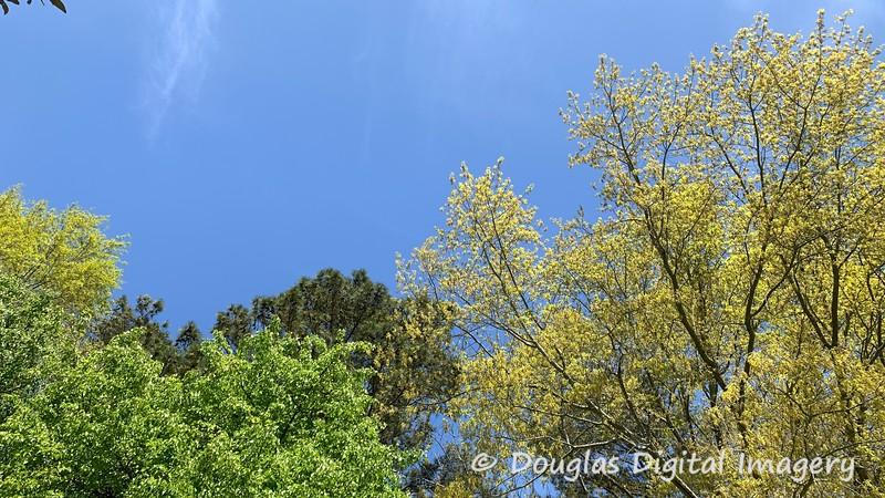4/3/21 - Spring has Sprung