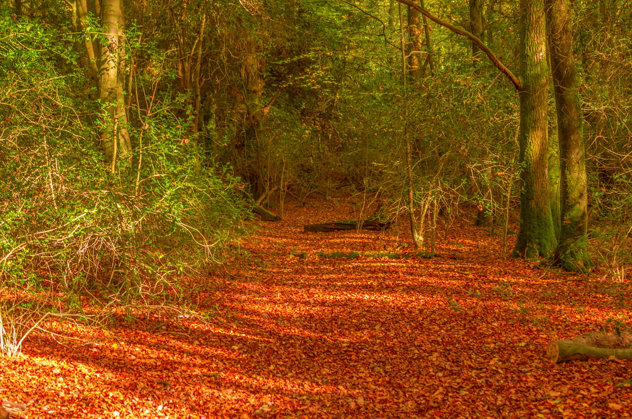 Paved with Leaves