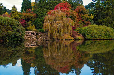 Sheffield Park Reflections