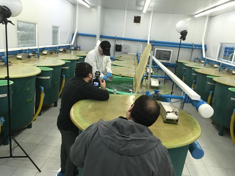 Fotografias Industria Acuícolas